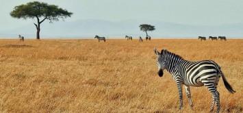 digital-marketing-in-africa-1